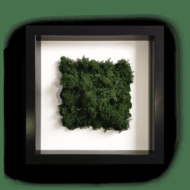 Renifer-Czarnus-Naturowaty-Oswojony-01